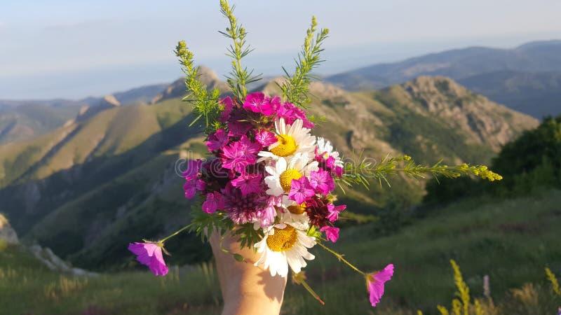 Flowers on the mountains stock photos