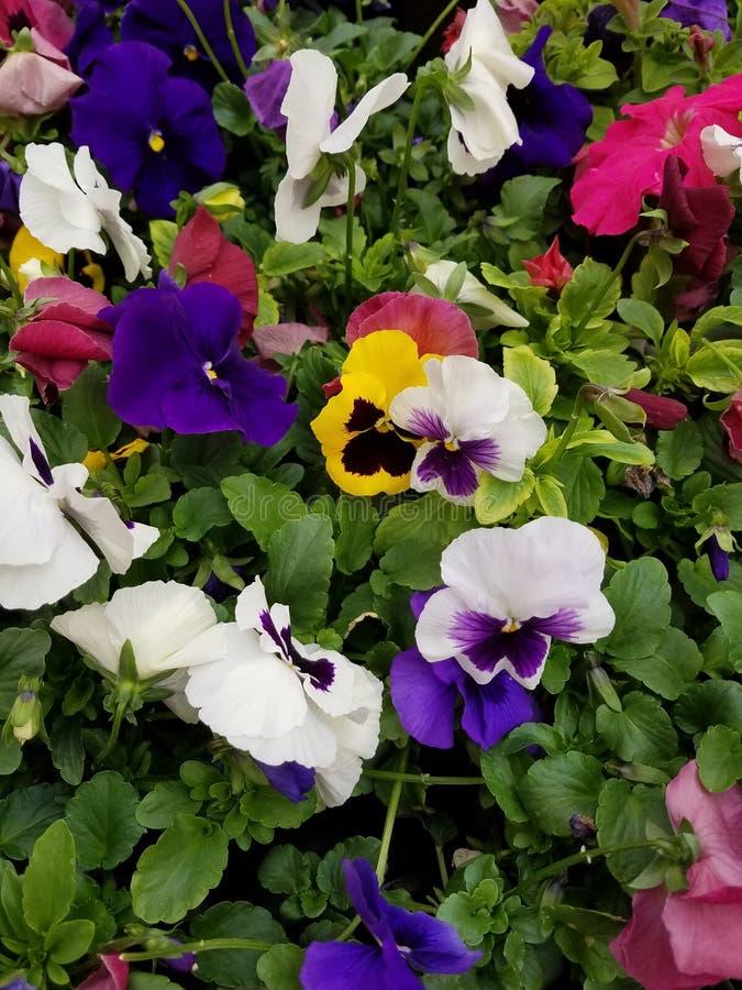 Flowers! Multi-colors! stock photo