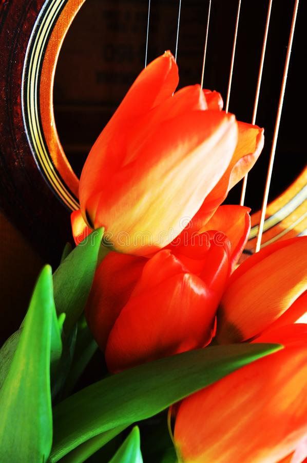 Flowers and music royalty free stock photos