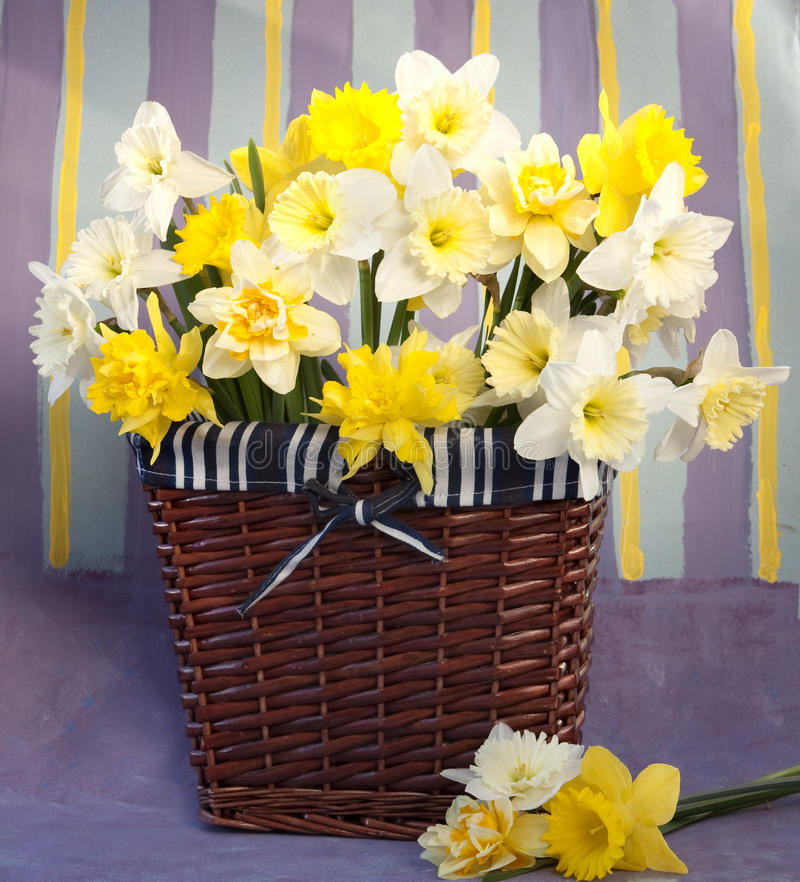 Download Flowers narcissus stock photo. Image of energetic, happy - 14036772