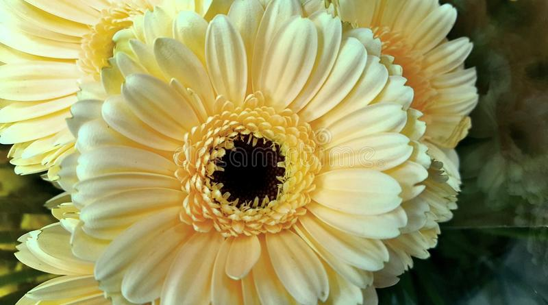 Flowers nature bloomig yellows beautiful royalty free stock photography