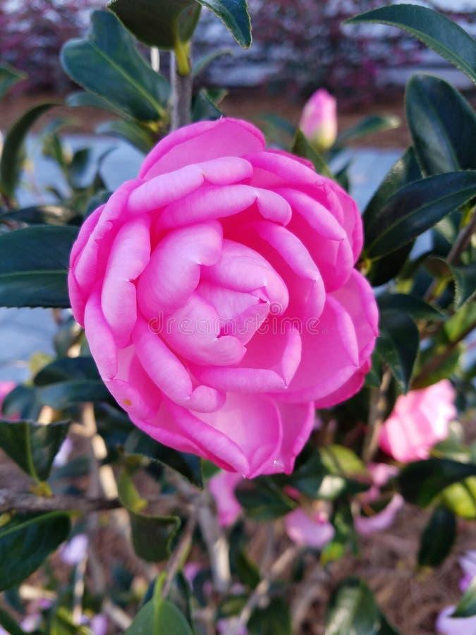 Flowers. Nature spring easter flora bg walpaper stock image