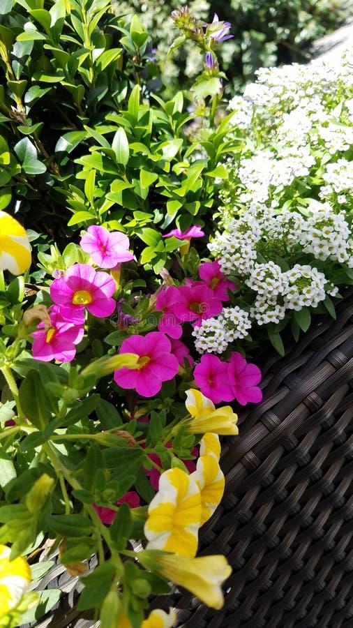 Flower basket. Flowers nature spring easter flora bg walpaper basket background royalty free stock images