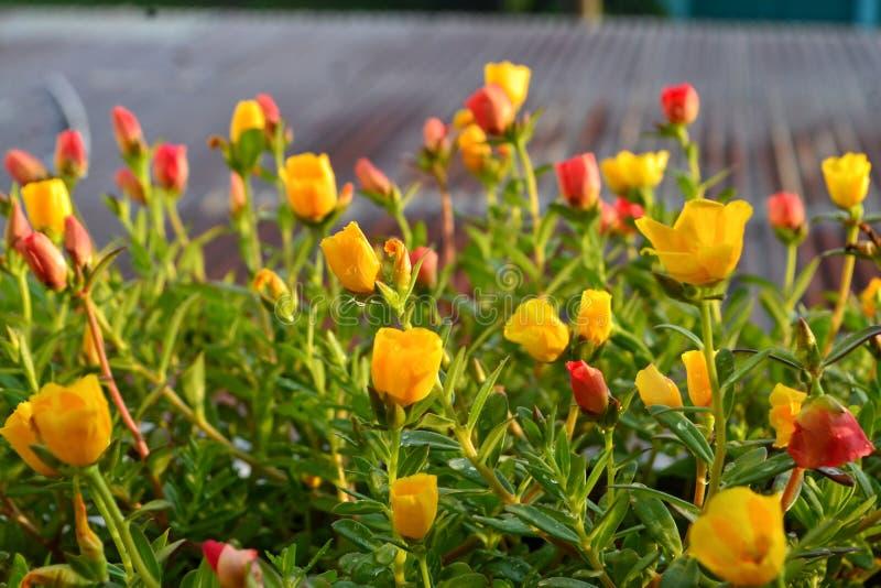 Flowers, nature, yellow flowers, beautiful flowers stock image