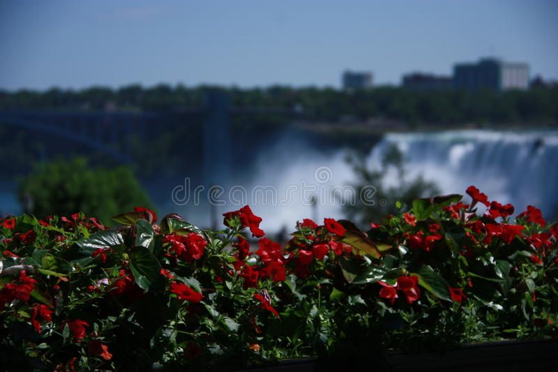 Flowers in Niagara Falls. Flowers with scenic backdrop of Niagara Falls royalty free stock image