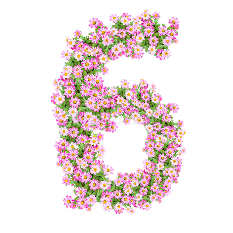 Flowers Numbers 6 Stock Illustration  Illustration Of Fresh