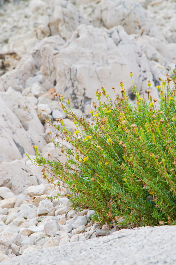 Free Flowers On The Rocks Stock Image - 20793661