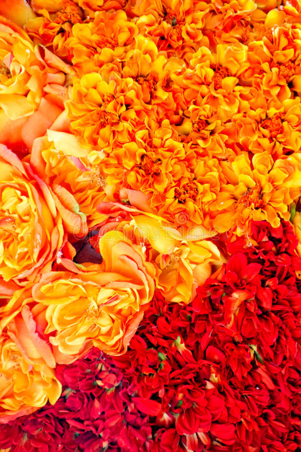 Flowers in orange and red