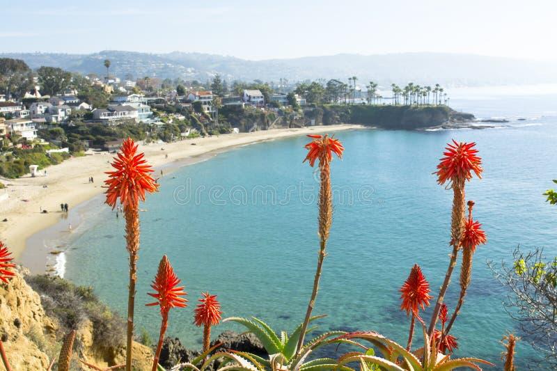 Flowers over beach cove stock photo