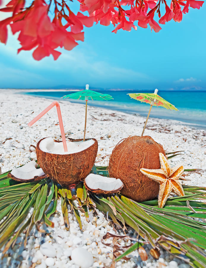 Download Flowers over coconuts stock image. Image of coconut, food - 32302645