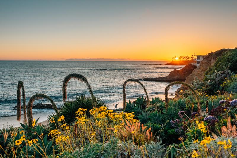 Flowers and the Pacific Ocean at sunset, at Heisler Park, in Laguna Beach, Orange County, California stock photo