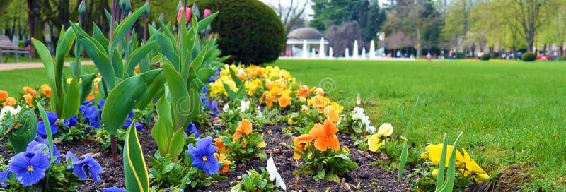 Flowers in park in city Podebrady, czech republic. Flowers in park on famous kolonada street in spa city Podebrady, Czech republic. View on fontain royalty free stock photos