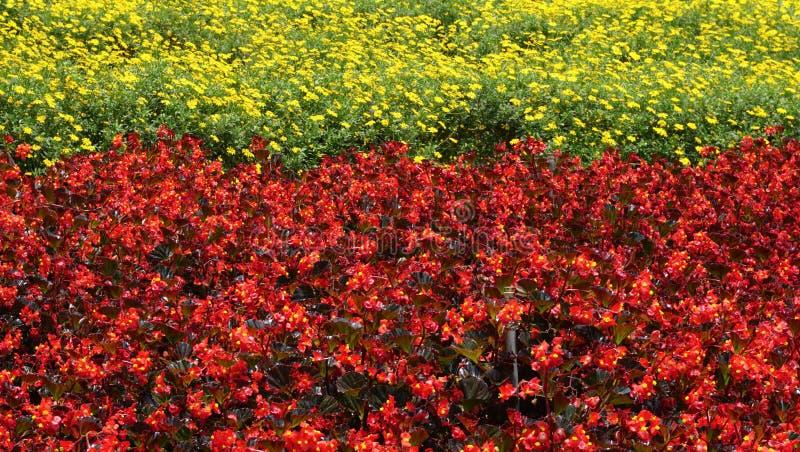 Flowers at the park in Nuwara Eliya, Sri Lanka stock images