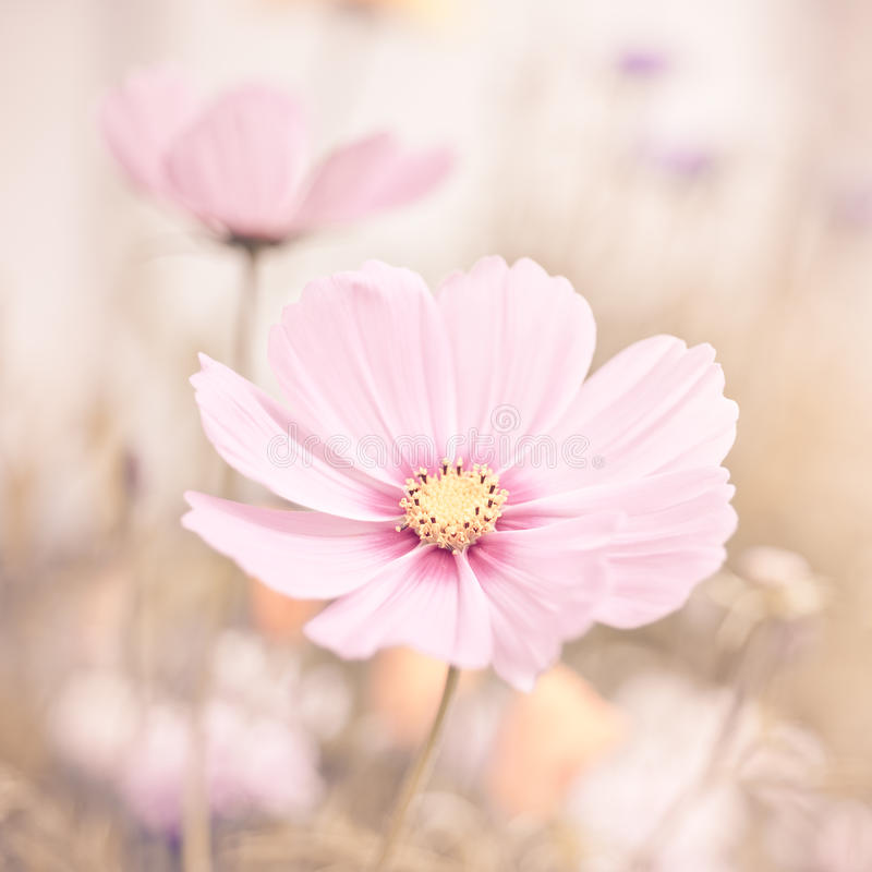 Flowers in pastel colors stock images