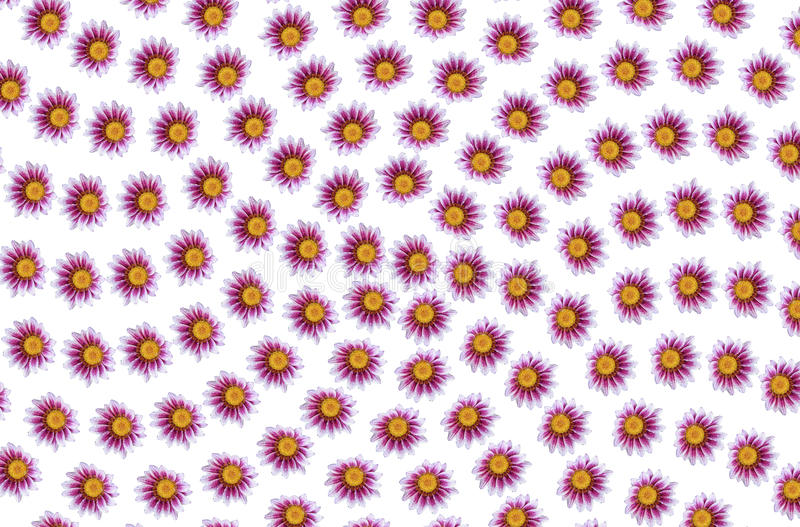 Flowers patterns royalty free stock images