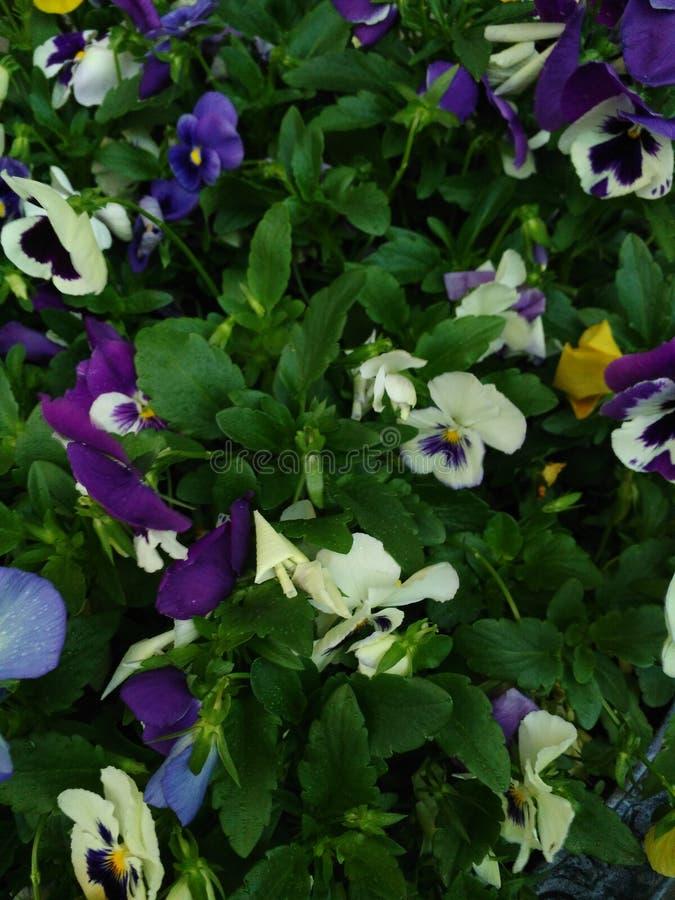 Flowers Pennsylvania stock photography
