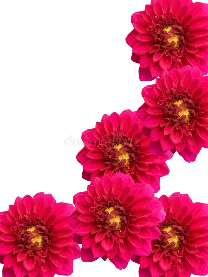 Download Flowers  peonies stock image. Image of season, flora - 10970273