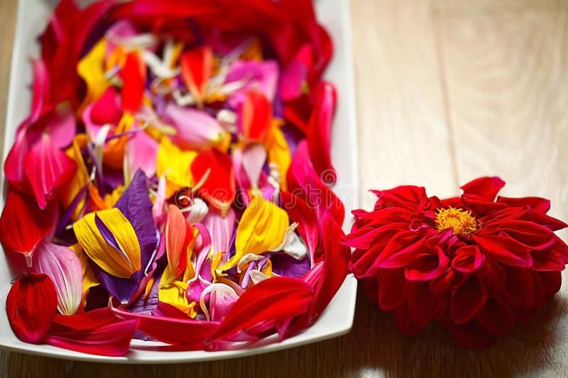Flowers petals royalty free stock photo