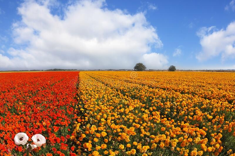 The flowers, photographed by an lens \'Fish eye stock image