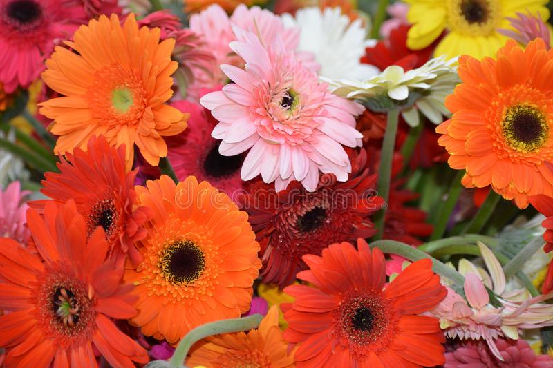 Flowers Photography royalty free stock photos