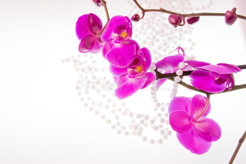 Download Flowers Of Pink  Orchid And Beads From White Pearls Stock Photo - Image of nature, background: 28478062