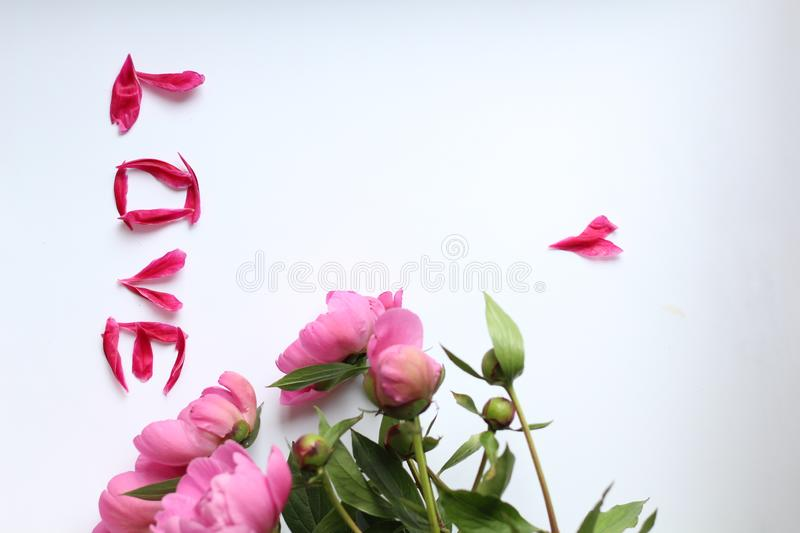 Flowers pink peonies on a white background. and petals love, Word love made of petals stock photos