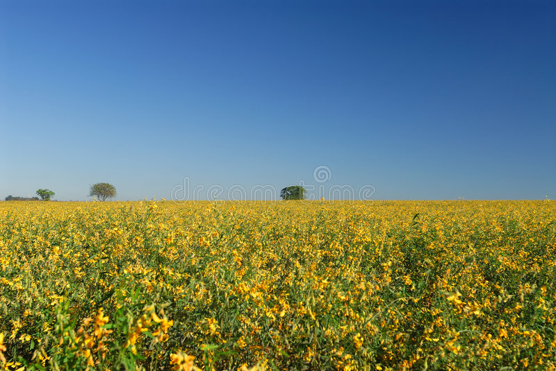 Flowers and plantation stock images