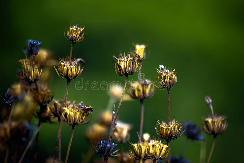 Flowers and plants 1 royalty free stock photo