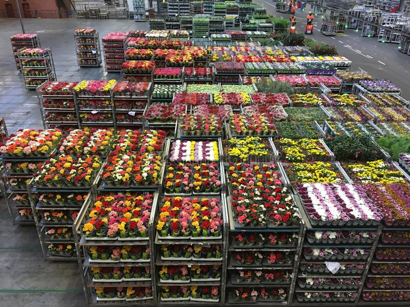 Flower auction royalty free stock photo
