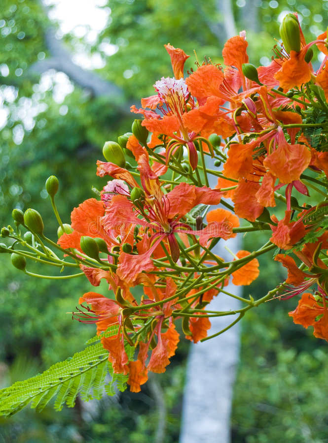 Download Flowers and pods stock photo. Image of branch, environment - 5645444