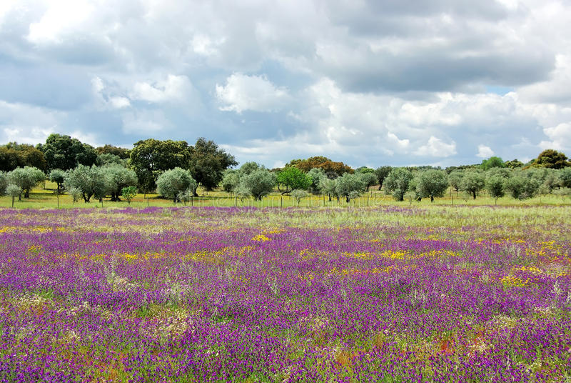 Flowers on portuguese field stock image