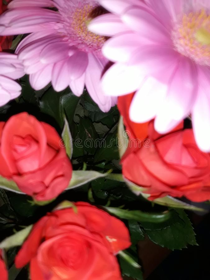 Flowers. Possibly my favourite picture ever royalty free stock images