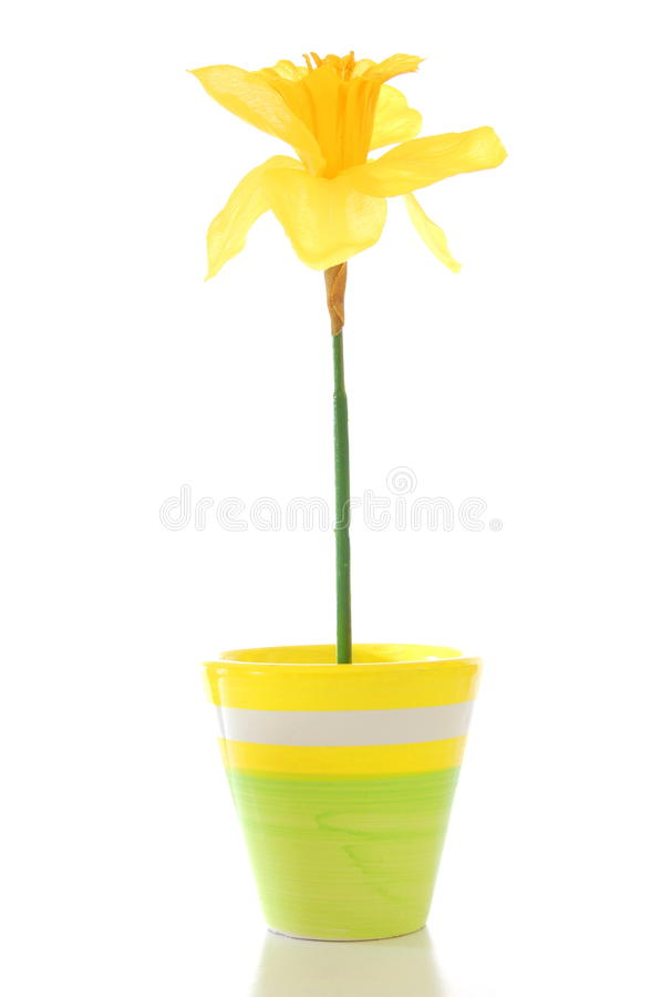 Flowers in pot. Isolated on white background stock photos