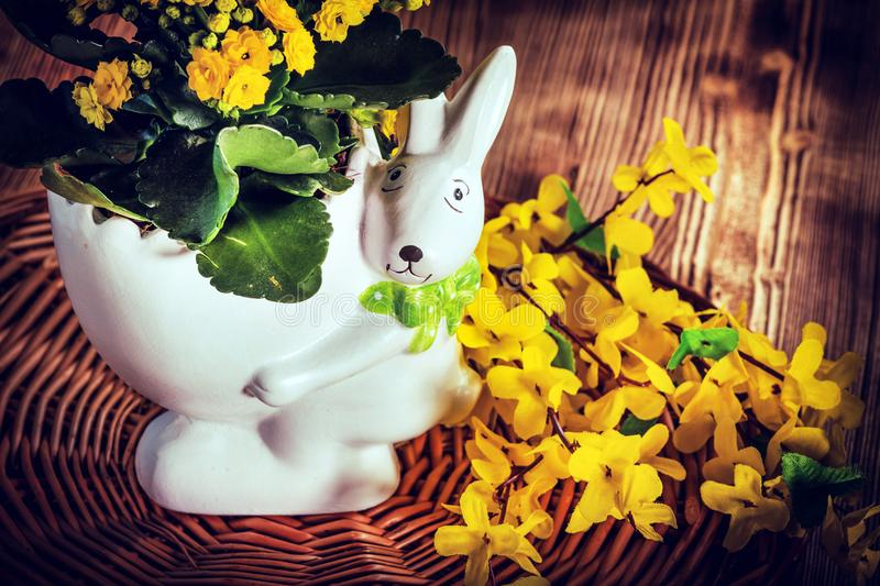 Flowers in a pot. royalty free stock images