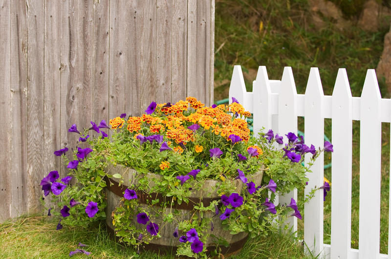 Flowers pot near fences. Colorful flowers including petunias and marigolds in large pot near wooden fences royalty free stock images