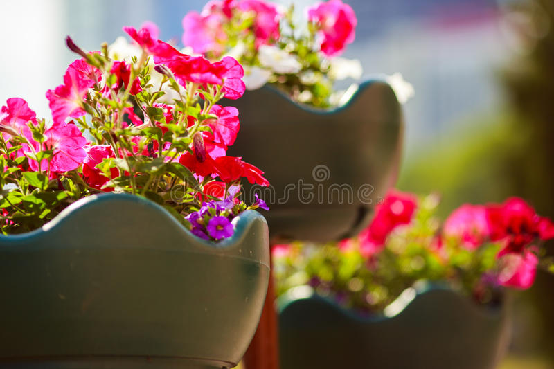 Flowers in a pot. On the street royalty free stock photography