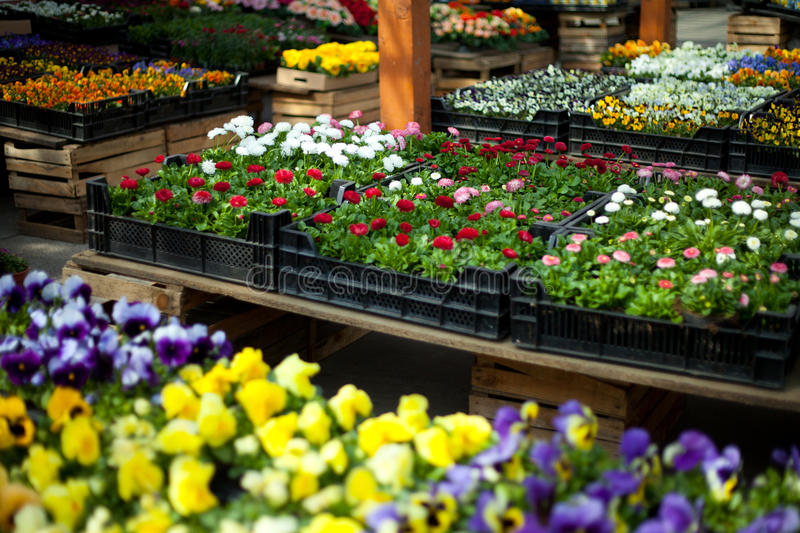 Flowers in pots, florists royalty free stock photos