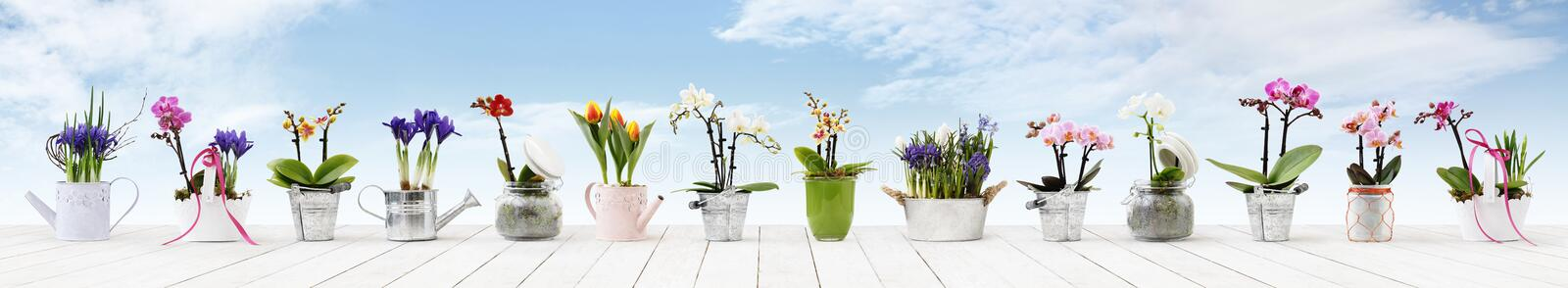 Flowers in pots set isolated on white wood table and sky background, web banner with copy space for florist shop royalty free stock photography