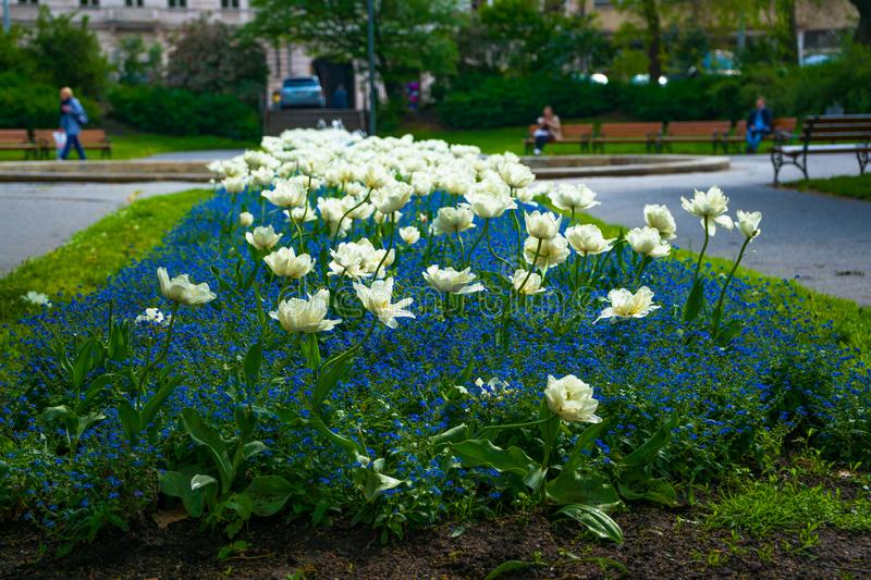 Flowers in Prague in summer, Czech Republic, beautiful view royalty free stock photos