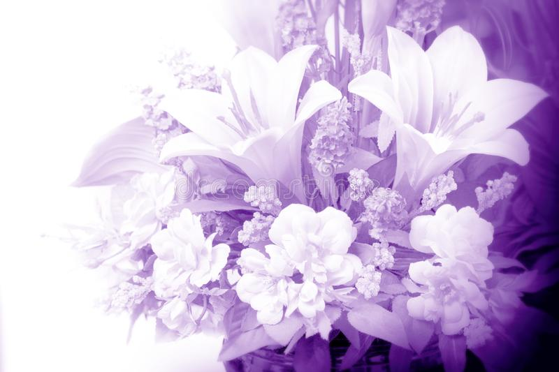 Flowers in purple royalty free stock photography