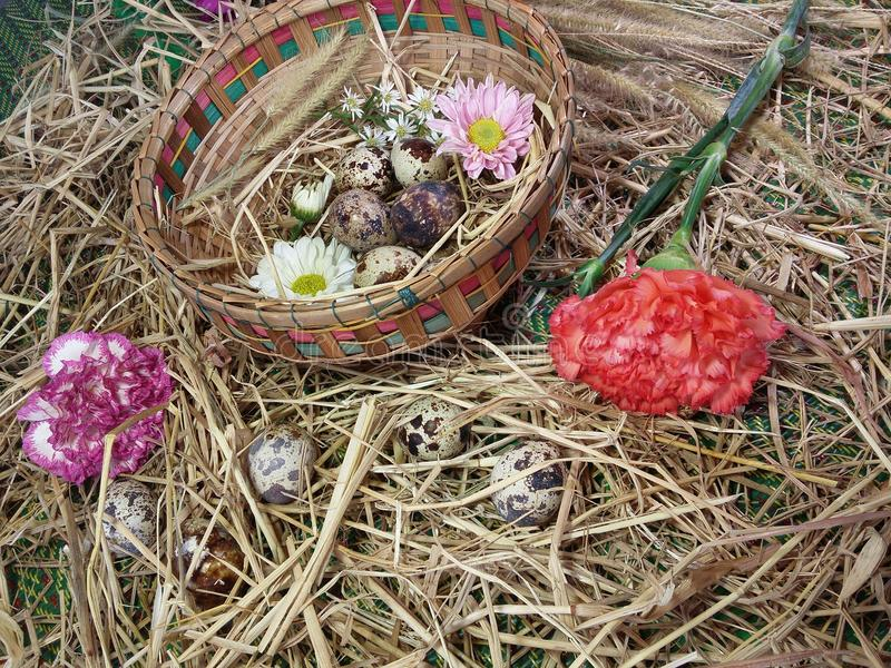 Flowers and quail eggs in bamboo basket on thatch background texture. White gray and brown design by nature stock photos