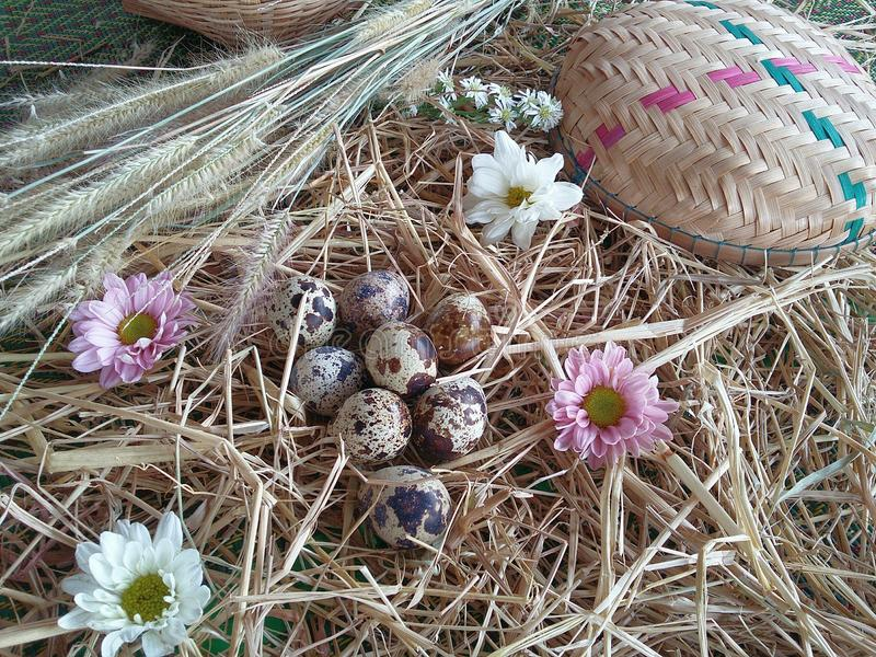 Flowers and quail eggs on thatch background texture. White gray and brown design by nature royalty free stock photography