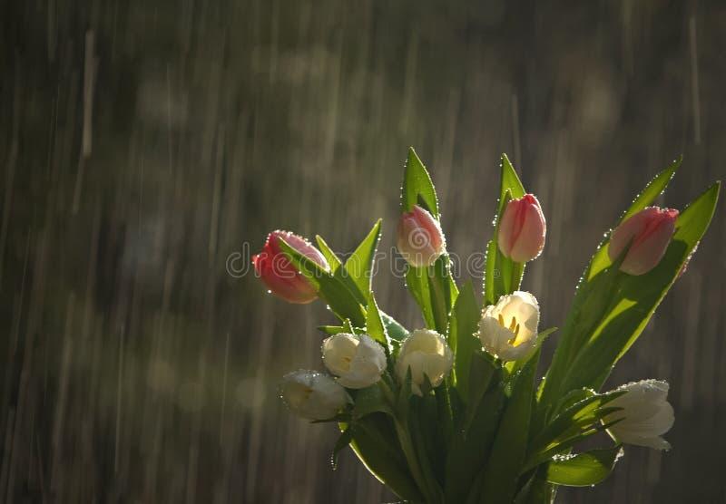 Flowers in rain stock photo