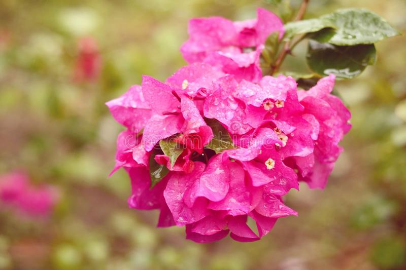 Flowers in the rain stock photography