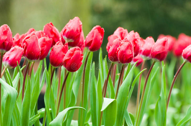 Download Flowers in rainy day stock image. Image of background - 28213025