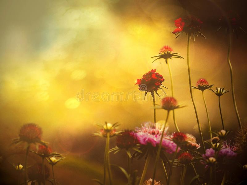 Flowers royalty free stock photography