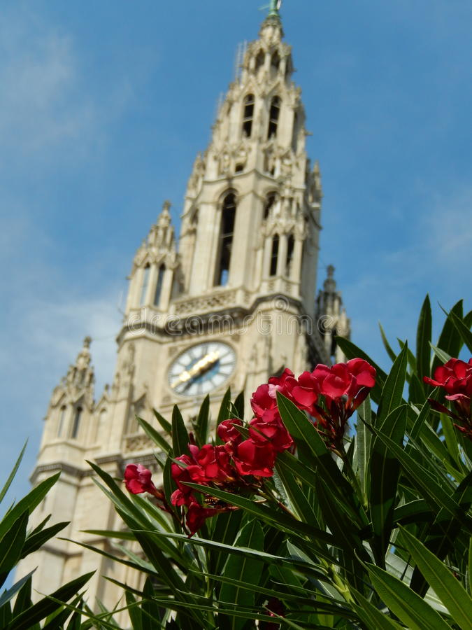 Flowers at The Rathaus royalty free stock photography