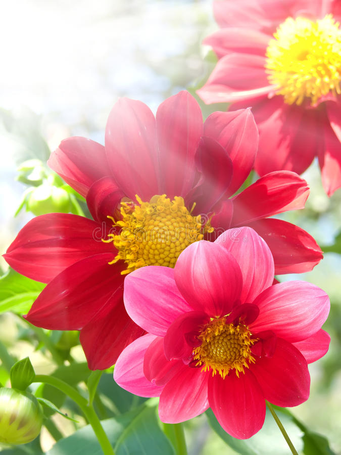 Flowers red petals stock photo