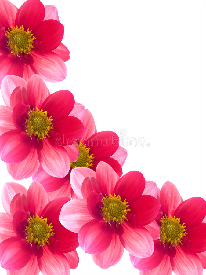 Flowers with red and pink petals royalty free stock photos
