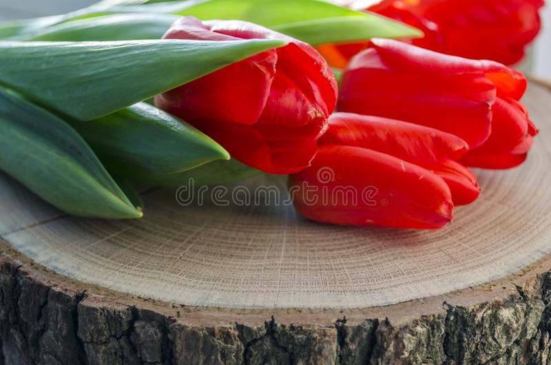 Flowers red tulips stock images
